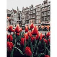 Цветята на Амстердам 1